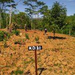 Kavling Kebun Durian Musang King Pesona Alam Pancaniti Stok 2 Unit Luas 1.000 m2 Only 120 Juta