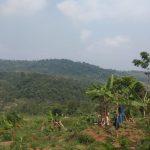 lokasi kebun durian dan jeruk lemon california pesona bukit madani puncak 2