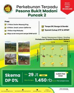 kebun durian musang king pesona bukit madani puncak 2