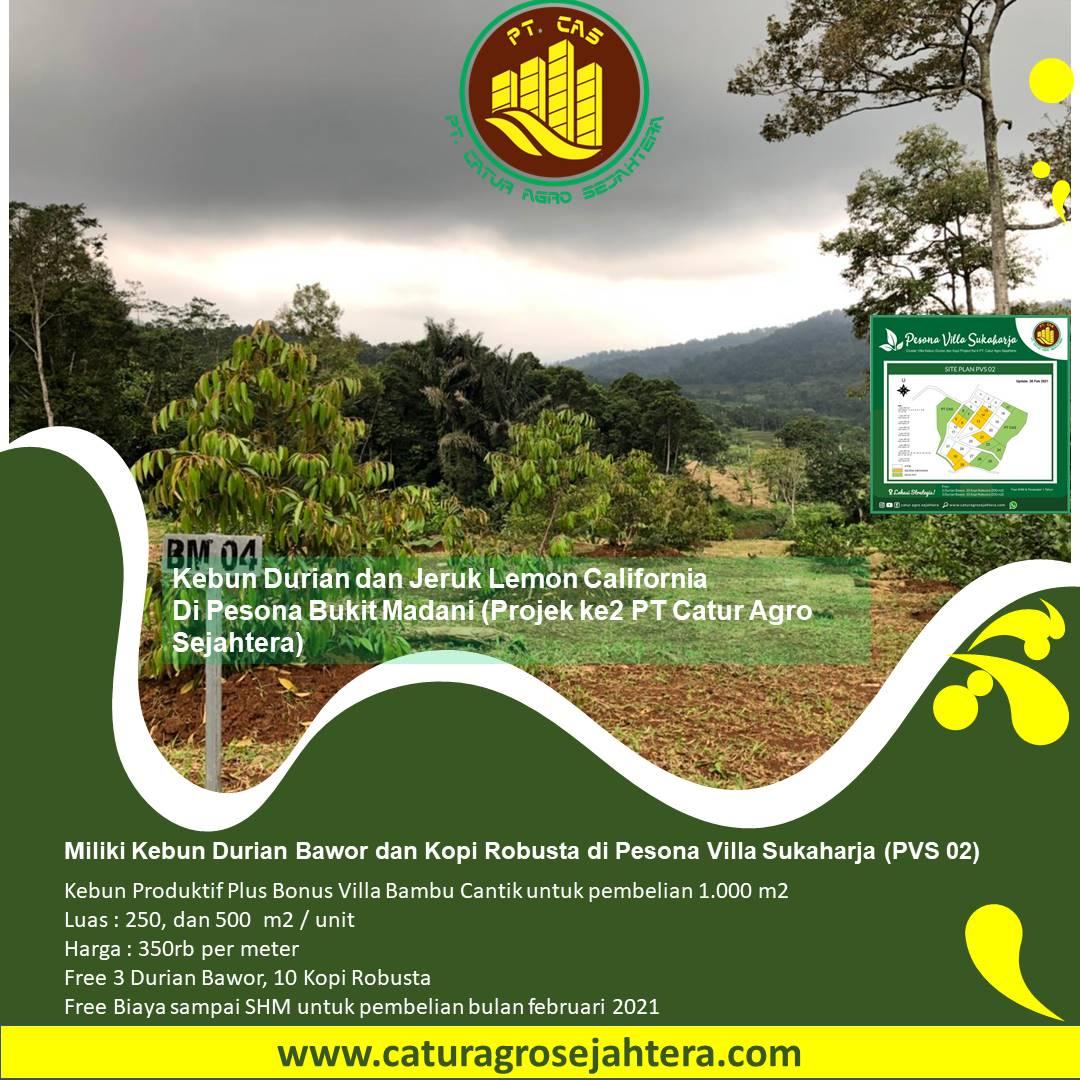 Update Perkebunan Terpadu Pesona Bukit Madani - Ready Stock